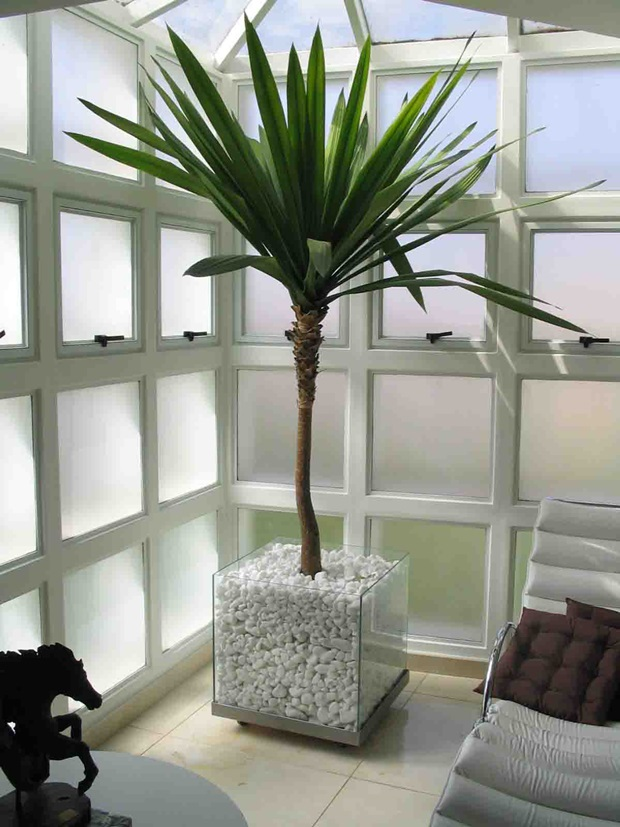 Plantas ornamentais para interiores como usar for Palmeras decorativas exterior
