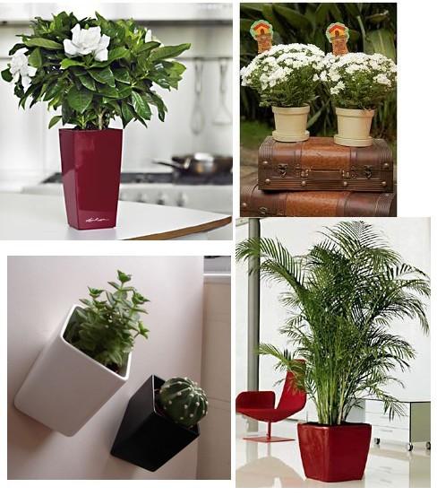 Decora o de interiores com vasos ornamentais - Plantas de flores para interiores ...
