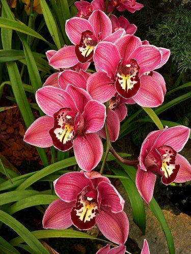 cuidar-de-orquideas-19