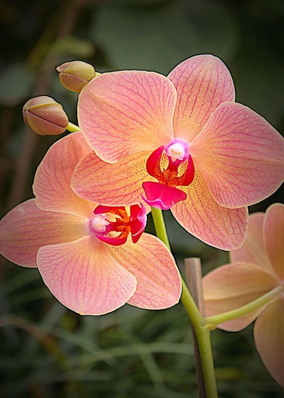 Como cuidar de orquídeas? Guia absolutamente completo! 1
