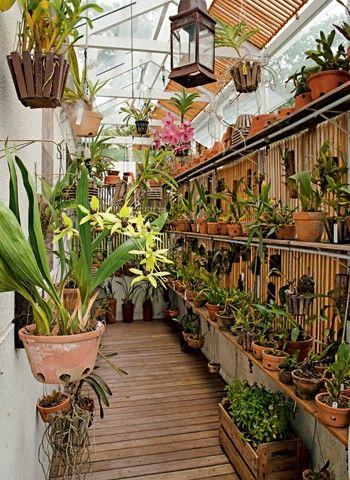 cuidar-de-orquideas-24