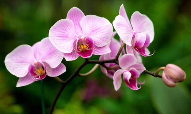 Orquídea: saiba tudo sobre essa planta e aprenda a cuidar da sua! 1