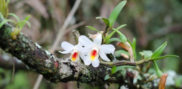 Qual é a minha orquídea
