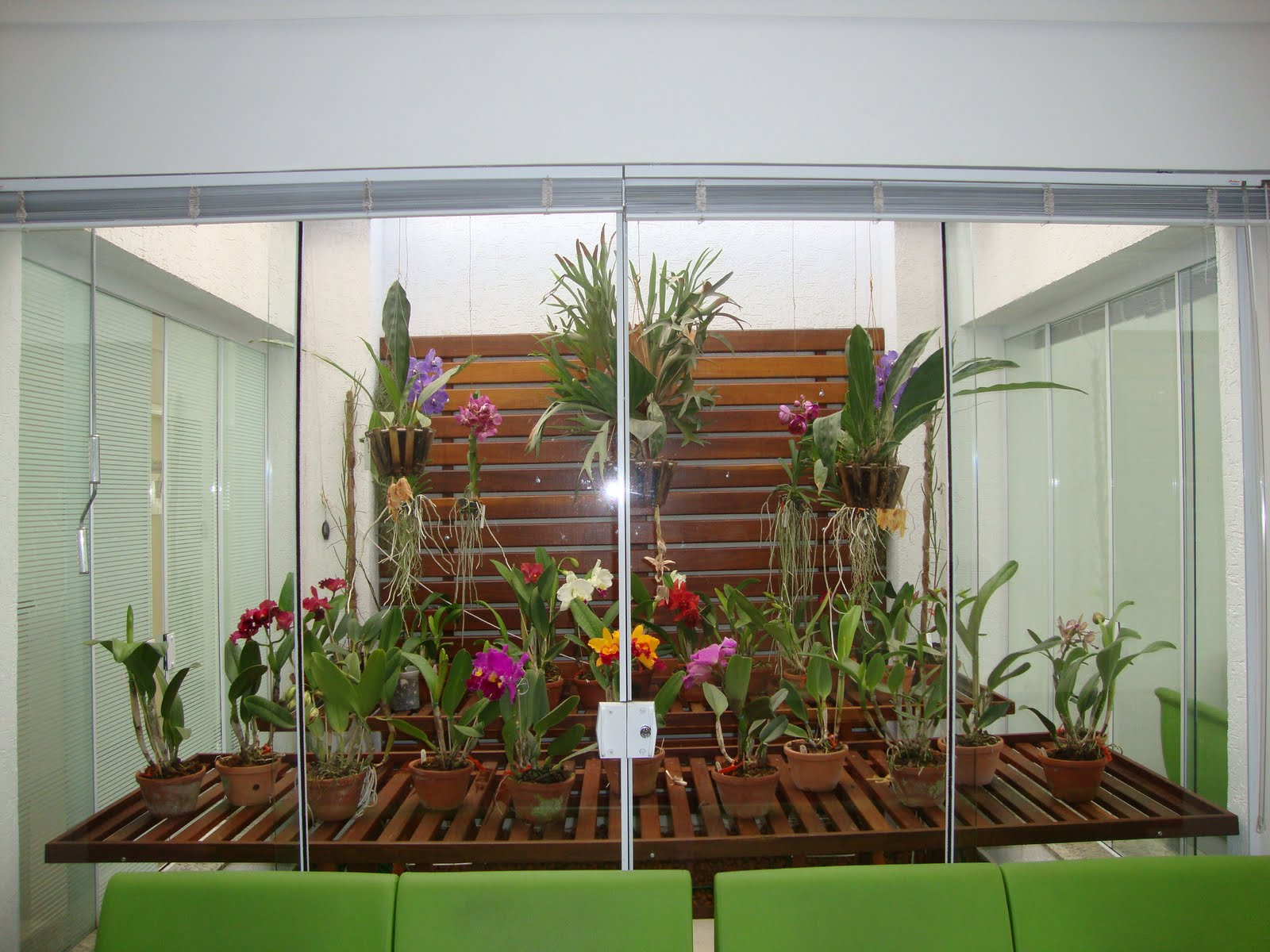 A quantidade de luz necessária para a sua orquídea